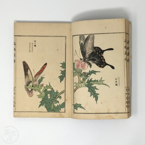 Illustrated Book of Insects by Morimoto Tokaku